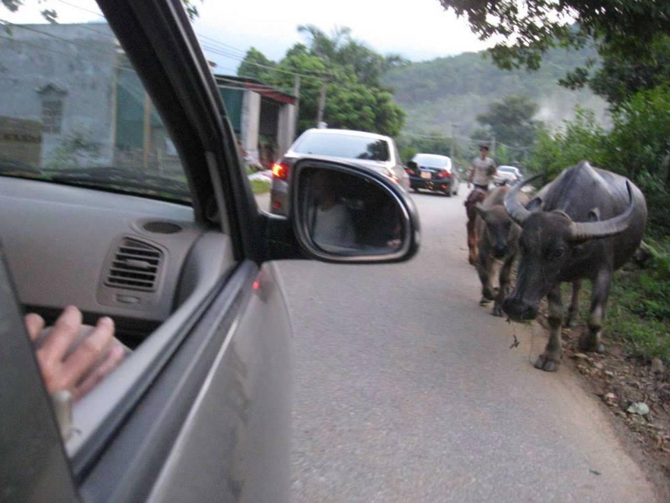 thai-cuc-quyen-long-viet-2011-4